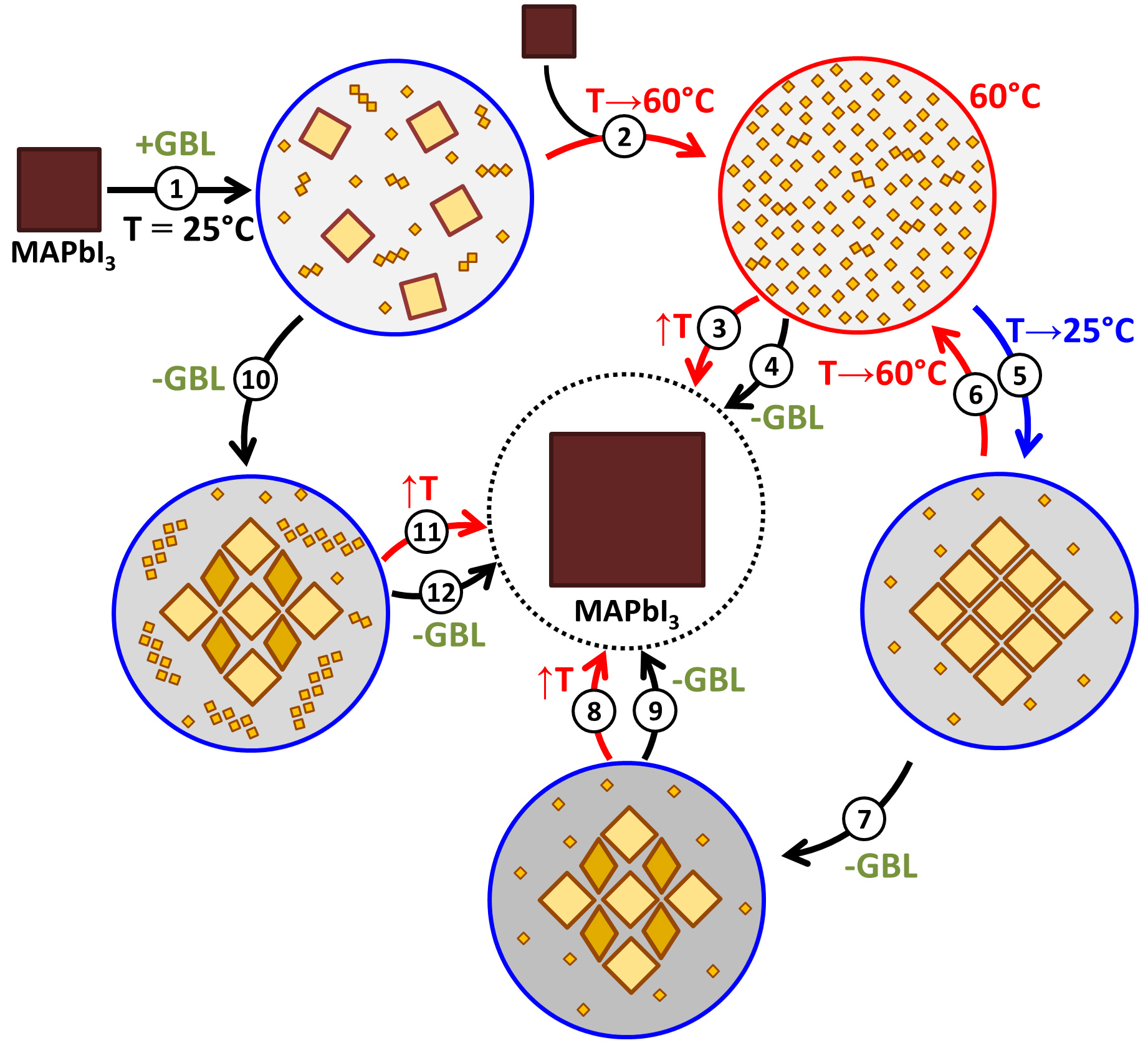 Solution processing of methylammonium lead iodide perovskite from gamma-butyrolactone: crystallization mediated by solvation equilibrium